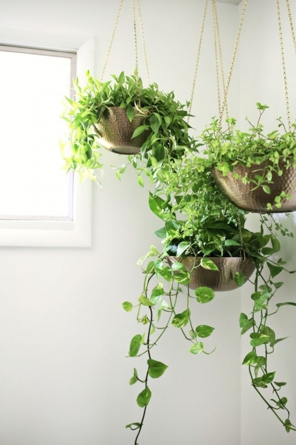 Inspiring Indoor Hanging Plants Photo