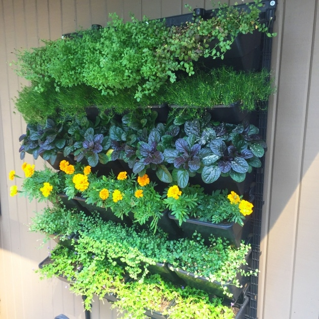 Inspiring Living Wall Panel Outdoor Planter Image