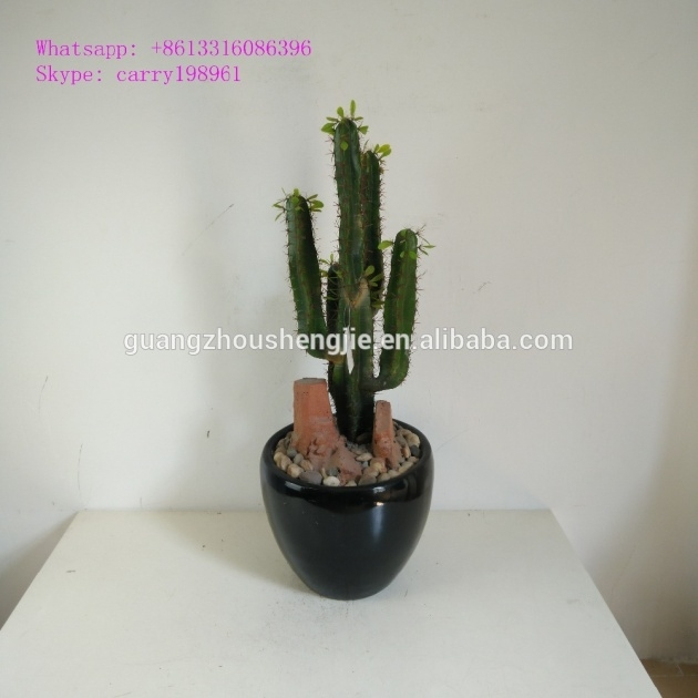 Inspiring Outdoor Artificial Cactus Plants Photo