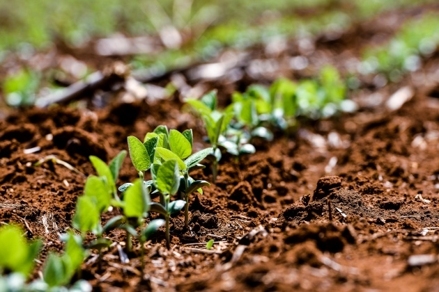 Inspiring Plant Soil Picture