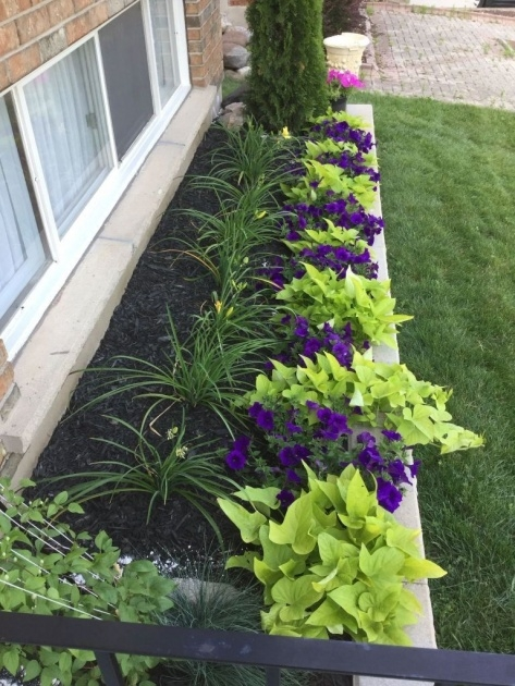 Inspiring Plants For Front Of House Ideas Photo