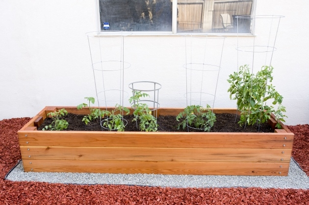 Inspiring Tomato Planter Box Picture