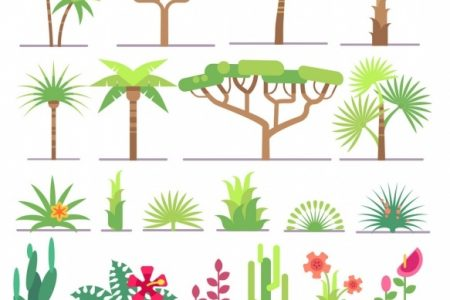 Tropical Types Of Plants