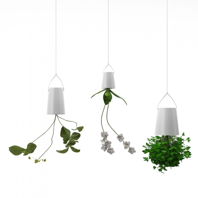 Inspiring Upside Down Hanging Plants Image