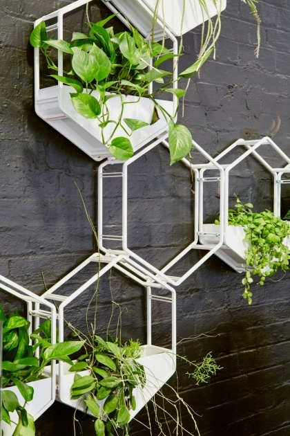 Inspiring Wall Planter Australia Picture