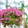 Hanging Flower Plants