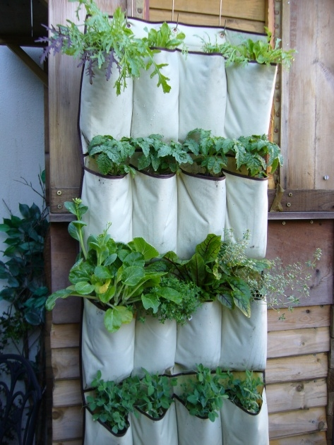 Interesting Hanging Vegetable Plants Image