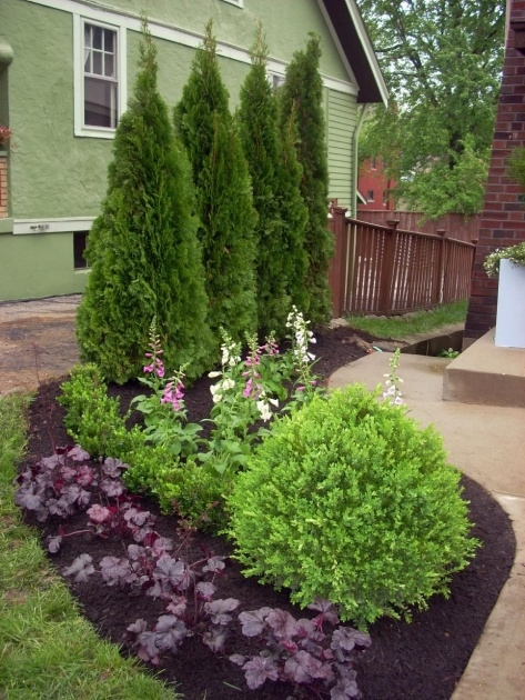 Interesting Most Popular Landscaping Shrubs Photo