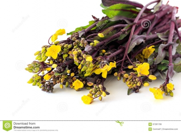 Interesting Plant Has Yellow Flowers And A Purple Stem Photo