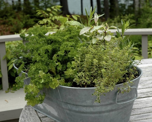 Interesting Planting Herbs In Pots Picture