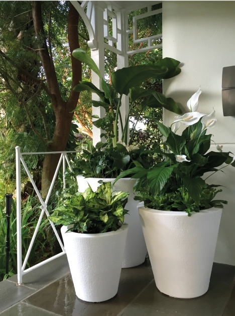 Interesting Self Watering Indoor Planters Image
