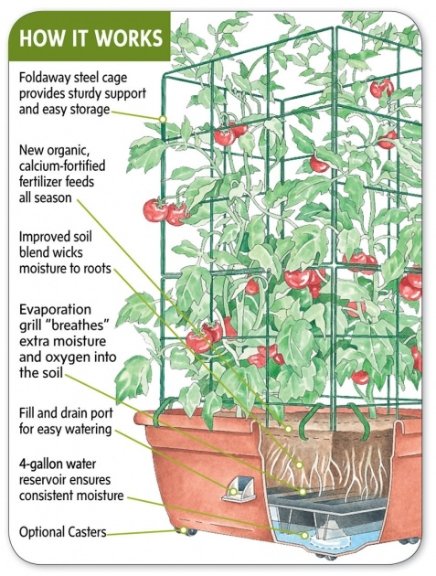 Interesting Self Watering Strawberry Planter Image