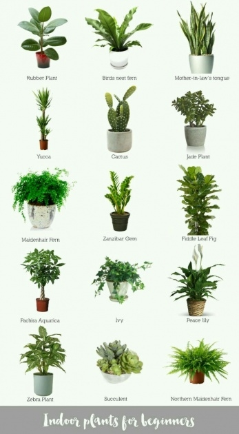 Interesting Type Of House Plants Picture