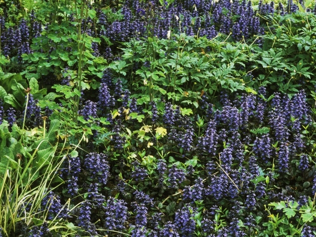 Marvelous Ground Cover Plants Image
