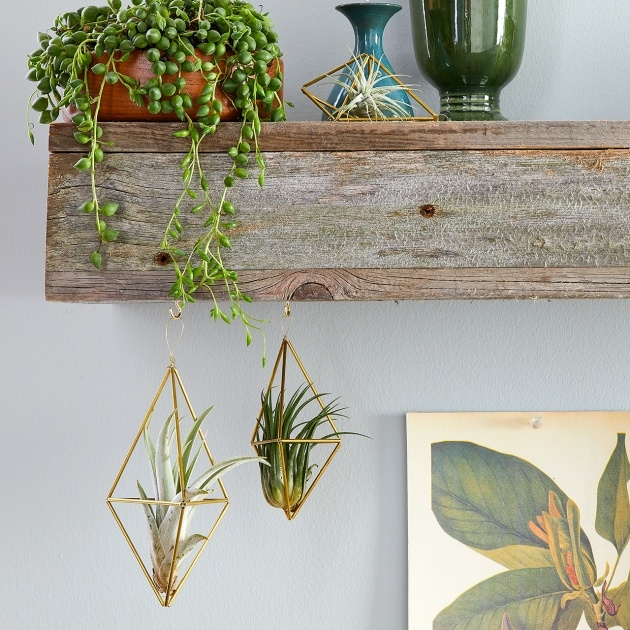 Marvelous Hanging Plant Holders Image