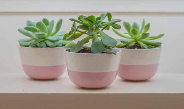 Marvelous Indoor Ceramic Planters Picture