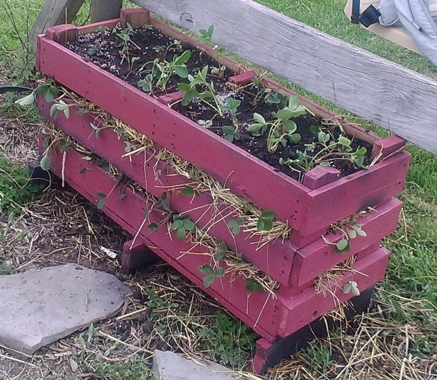 Marvelous Pallet Strawberry Planter Photo