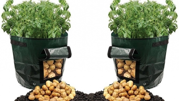 Marvelous Planting Potatoes In Bags Picture