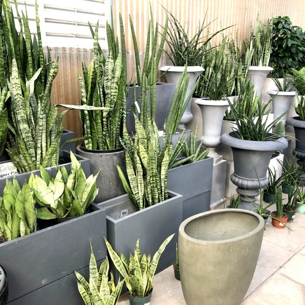 Marvelous Pots And Planters Photo