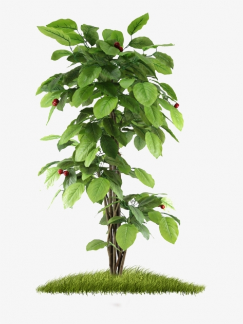 Marvelous Small Tree Plant Image
