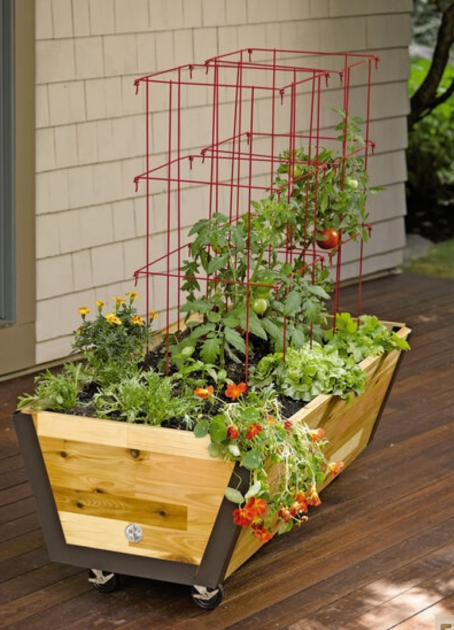 Marvelous Tomato Planter Box Photo