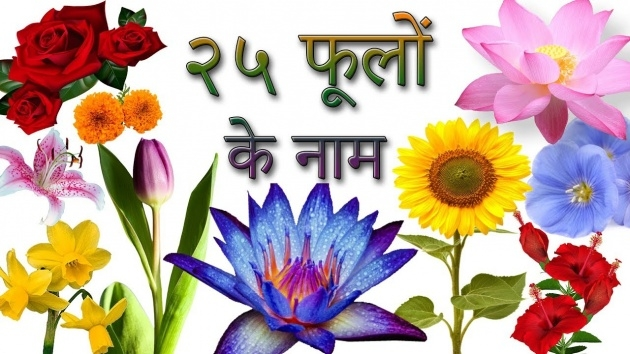 Marvelous Types Of Flowers In Hindi Image