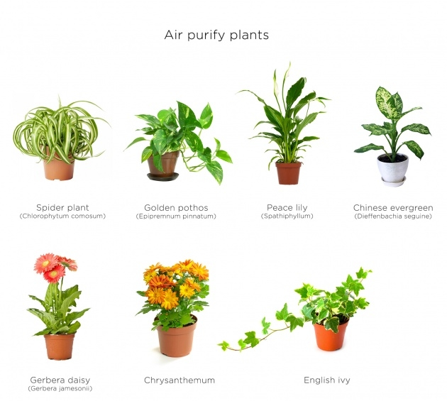 Most Creative Air Purifying Indoor Plants Photo