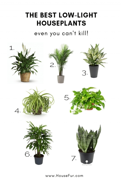Most Creative Best Indoor Plants For Low Light Image