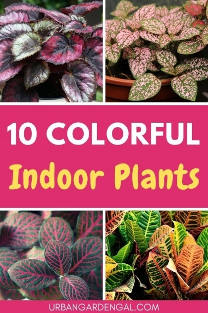 Most Creative Colorful Inside Plants Photo
