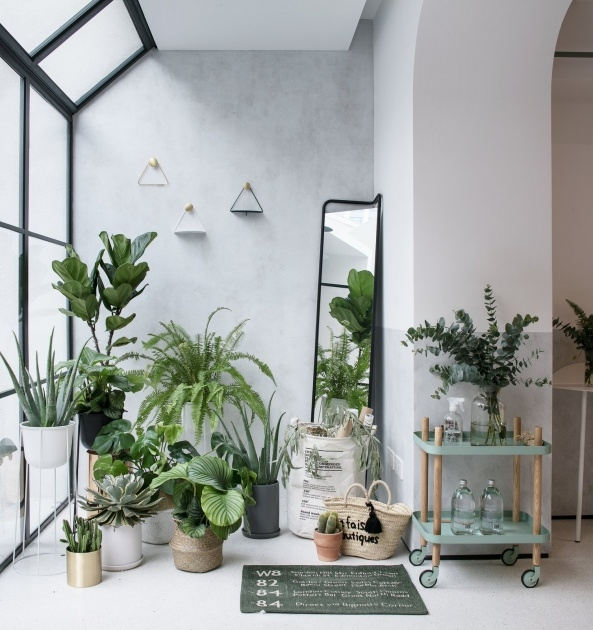 Most Creative Contemporary Indoor Planters Image