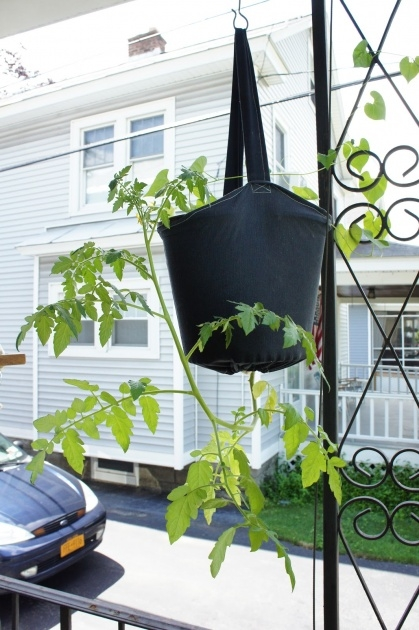 Most Creative Diy Upside Down Planter Photo