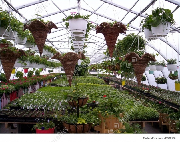 Most Creative Green House Plants Pictures Picture