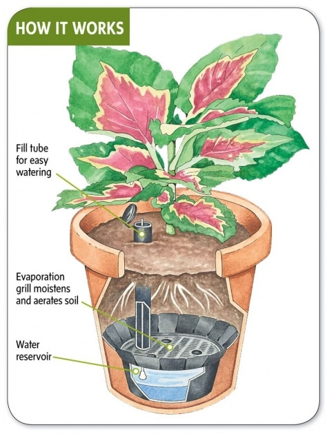 Most Creative How Do Self Watering Planters Work Image