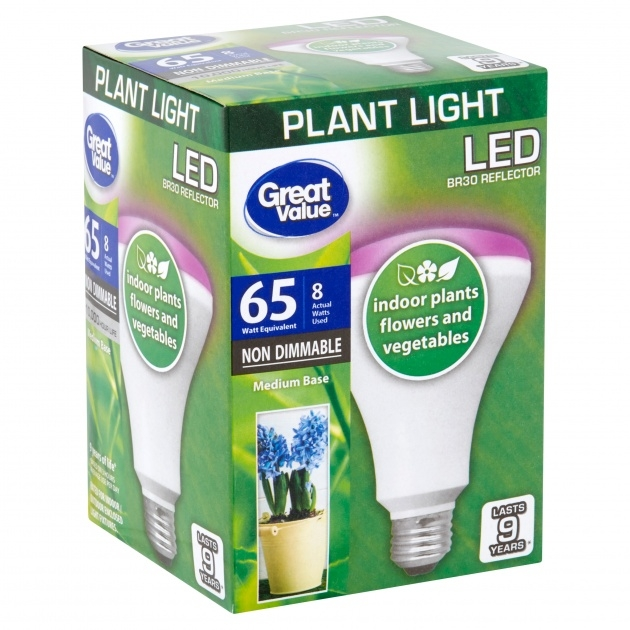Most Creative Plant Light Bulbs Picture