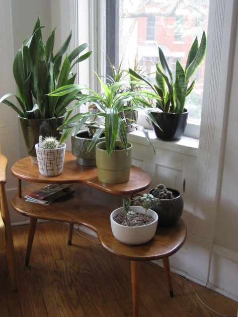 Most Creative Plant Table Indoor Photo