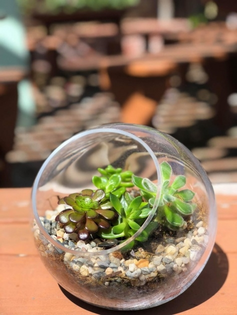 Most Creative Plants In Glass Bowl Picture