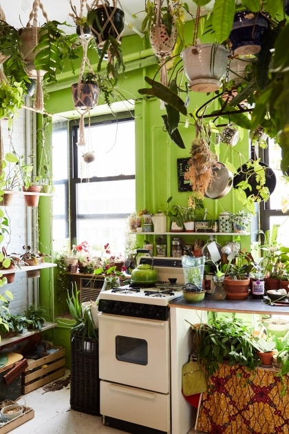 Most Creative Summer Rayne Oakes Houseplants Image