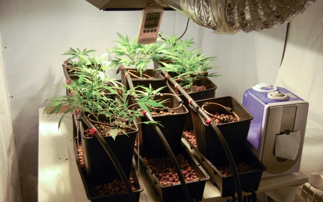 Most Creative Weed Plants Indoors Image