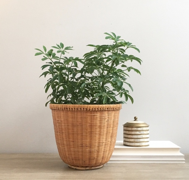Most Creative Woven Plant Basket Photo