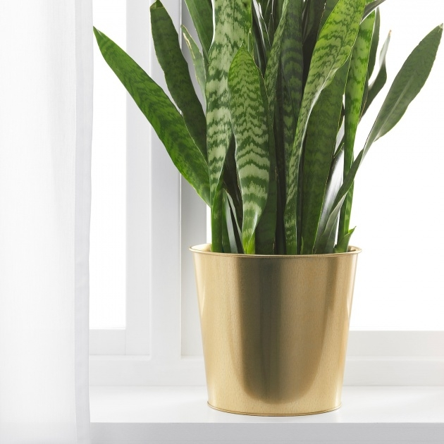 Most Perfect Brass Plant Pot Picture