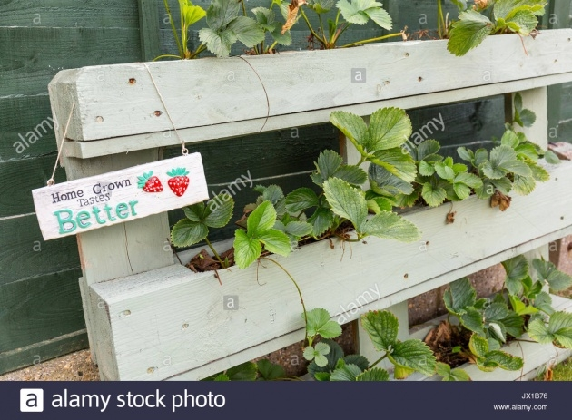 Most Perfect Pallet Strawberry Planter Picture