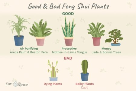 Plants In Bedroom Feng Shui