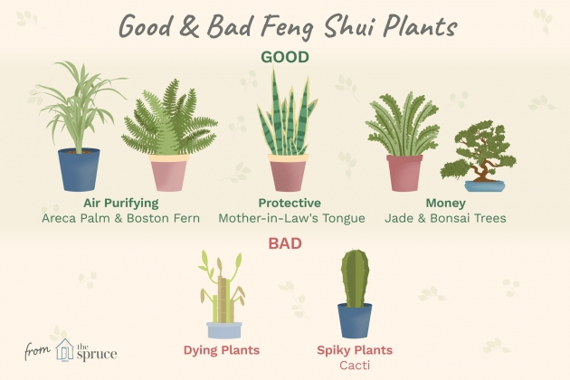 Most Perfect Plants In Bedroom Feng Shui Image