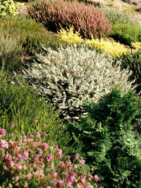 Most Perfect Small Outdoor Shrubs That Dont Need Light Picture
