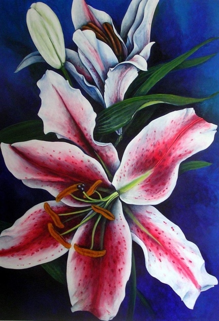 Most Popular Achieved Lily Flowers Picture