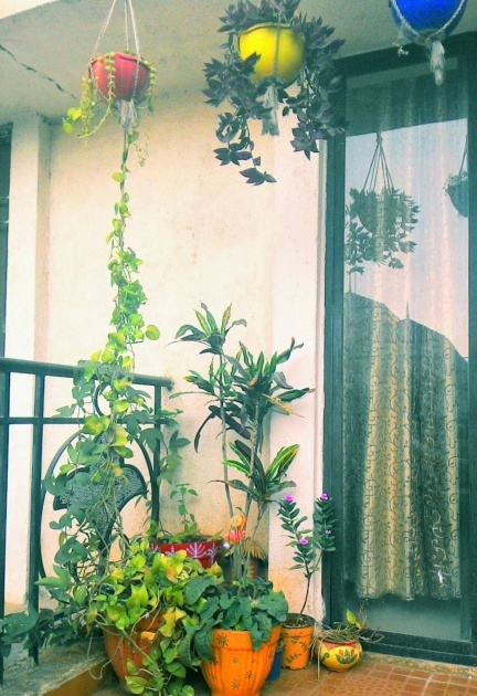 Most Popular Balcony Hanging Planters Photo