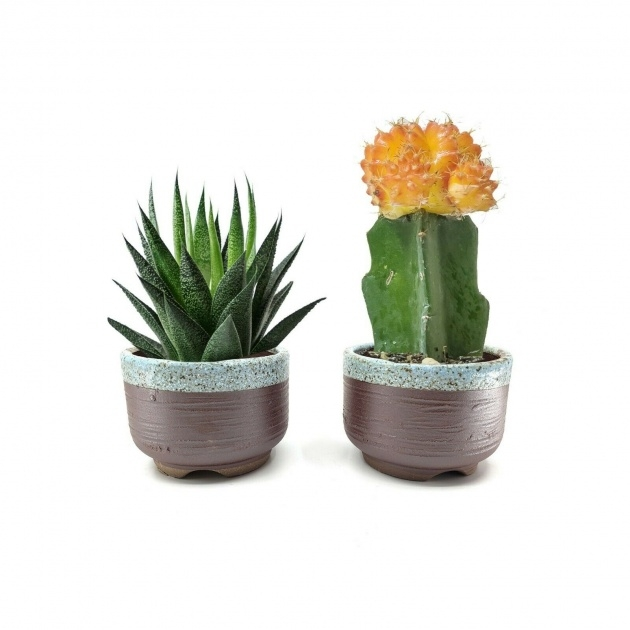 Most Popular Cactus Plant Pot Photo