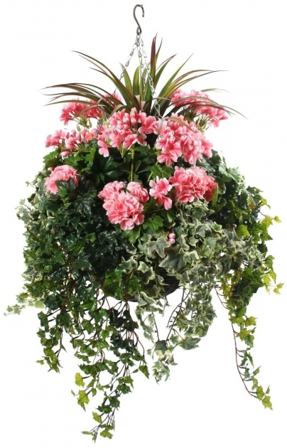 Most Popular Hanging Basket Foiliage Photo