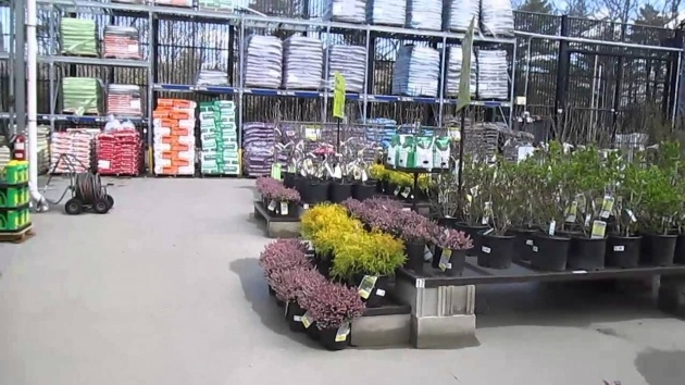 Most Popular Lowes Plants Photo