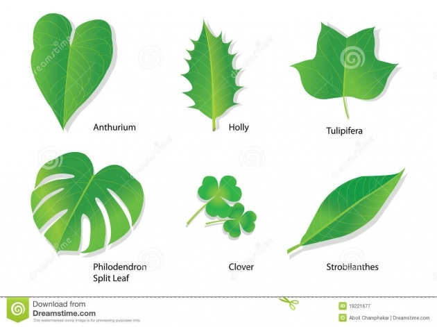 Most Popular Name Of Tropical Plants With Pictures Picture